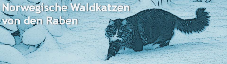 Norwegische Waldkatzen von den Raben